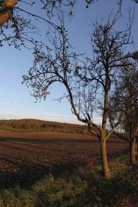 Winterschnitt eines Obstbaumes