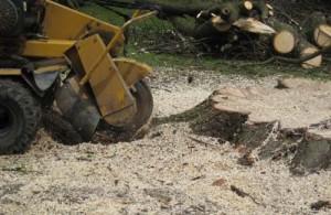 Baumwurzeln entfernen mit der Wurzelstockfräse
