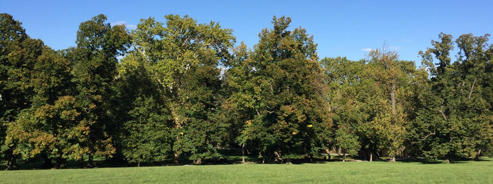 Baumpflege, Baumschnitt, Baumrodung Ing. Schranz in Wien