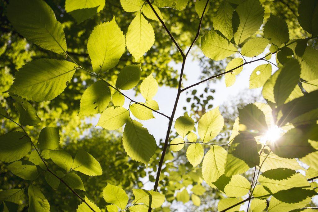Heilkraft von Bäumen